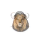 Lion resized