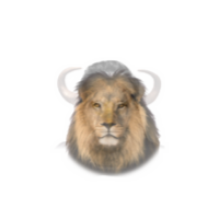 Lion resized
